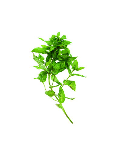 Wild Spearmint - Where to look: Fields with partial shade. How to prepare: Add to teas or dips, toss with peas, or sprinkle over meat.