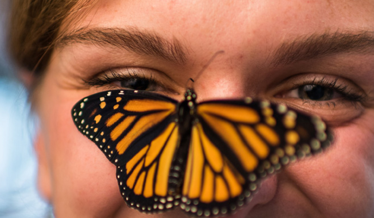 Monarch Butterflies' Spectacular Migration is at Risk – An Ambitious New Plan Aims to Help Save It
