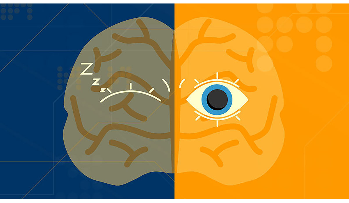How To Tell If A Brain Is Awake