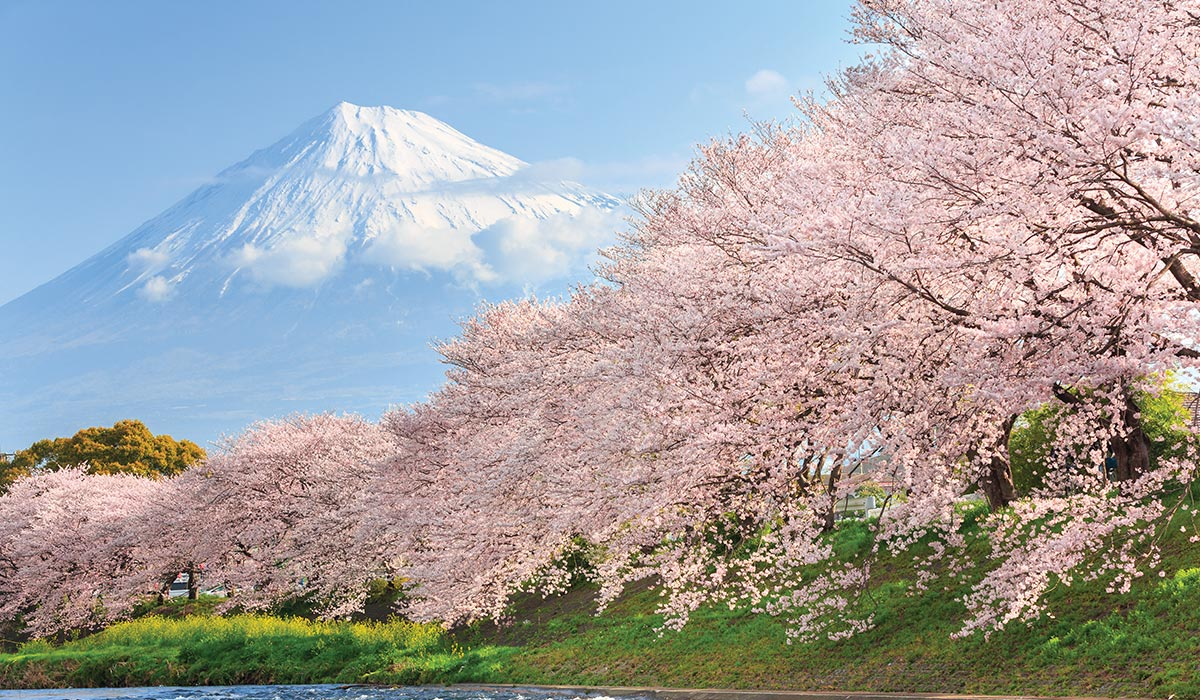 Japan In Bloom