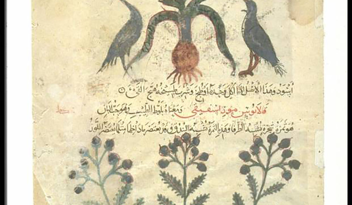 Leaf From An Arabic Translation Of The 22De Materia Medica22 By Dioscorides 620 930 70 Gatewayextension
