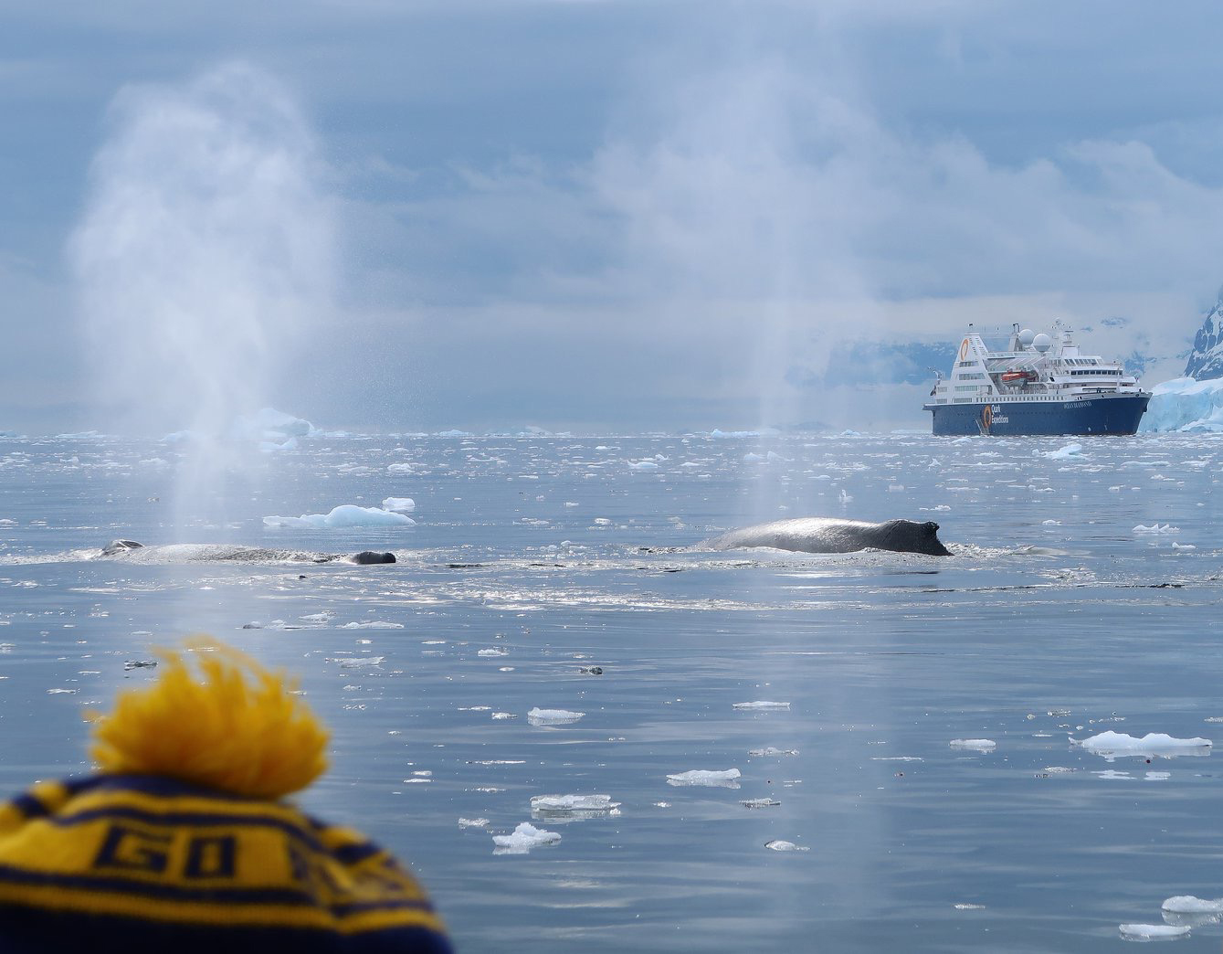 Barbara Ann Page, '69, MD'73, was delighted to meet two humpback whales down in Antarctica.