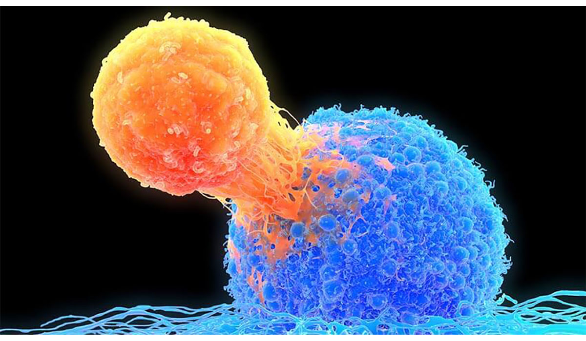 T Cell Attaching To Cancer Cell Gatewayextension