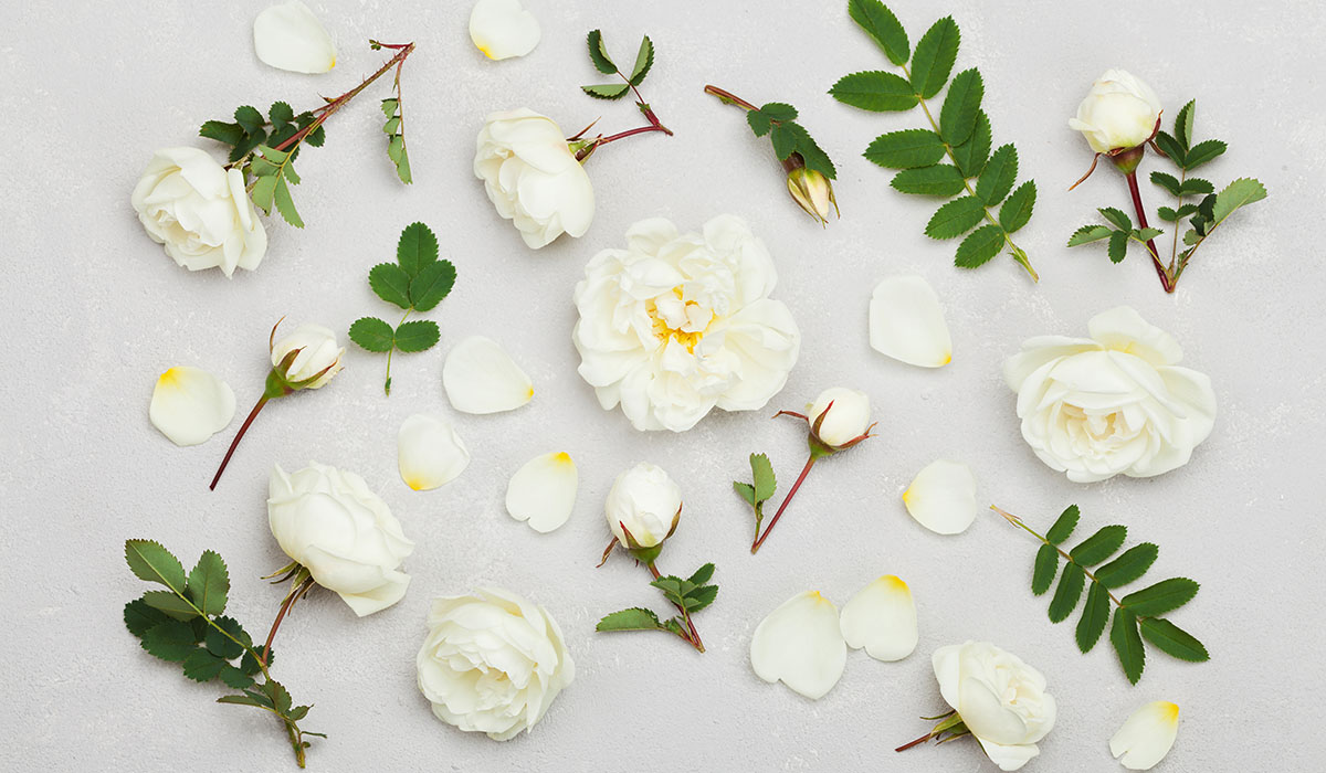 White Rose Flowers, Flat Lay Styling, Pastel Floral Pattern