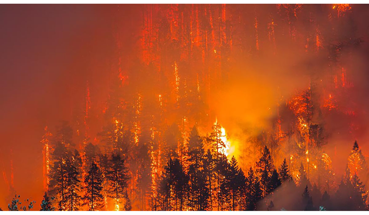 Wildfires: How to Protect Your Lung Health