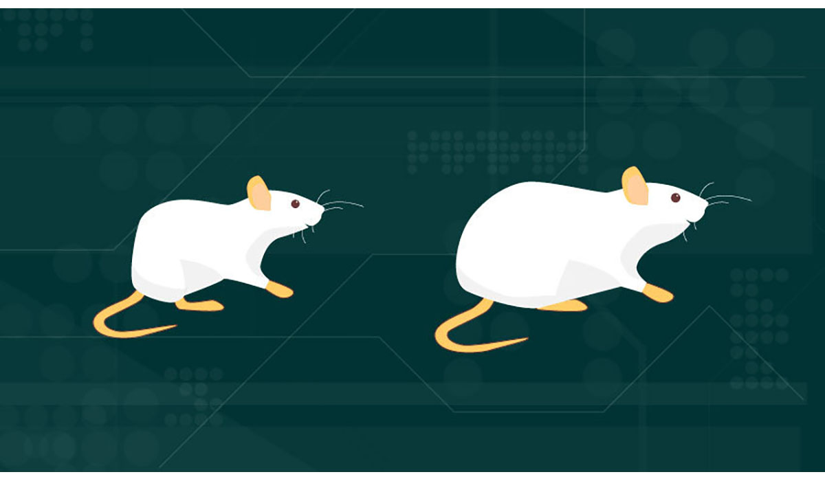 Puberty Genes And Leptin Fat In Mice Gatewayextension